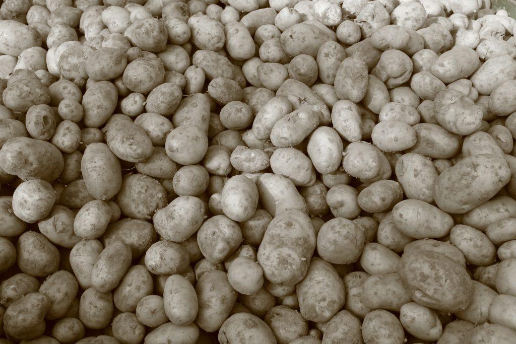 Sembra Patates